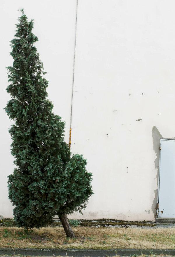 Baum - Nichts passierte, aber nie hatte die Tatsache, dass jeder Zeit etwas passieren könnte, aggressiver in der Luft gelegen.
